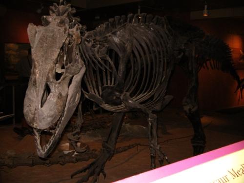 Allosaurus, eyeing his passing morsels.