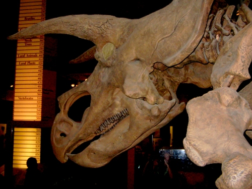 Across the Tyrannosaurus, this nemisis awaits.